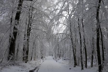 winter landscape in the marienhoelzung