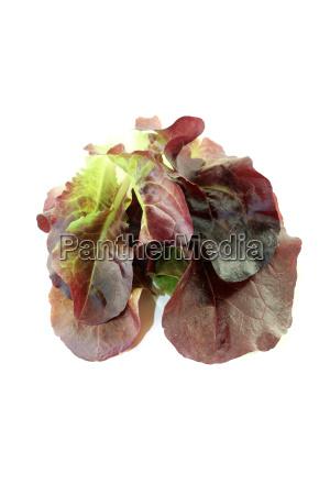 delicious crunchy red salad