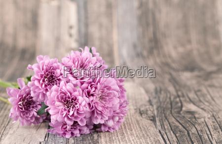 blomster med trae baggrund