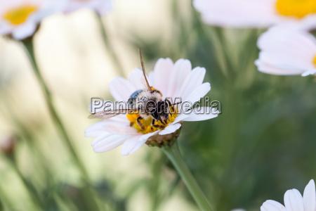 hardworking little bee