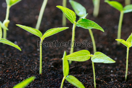 close up agriculture young plant growth