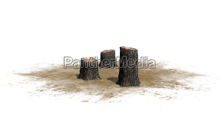 tree stump on white background