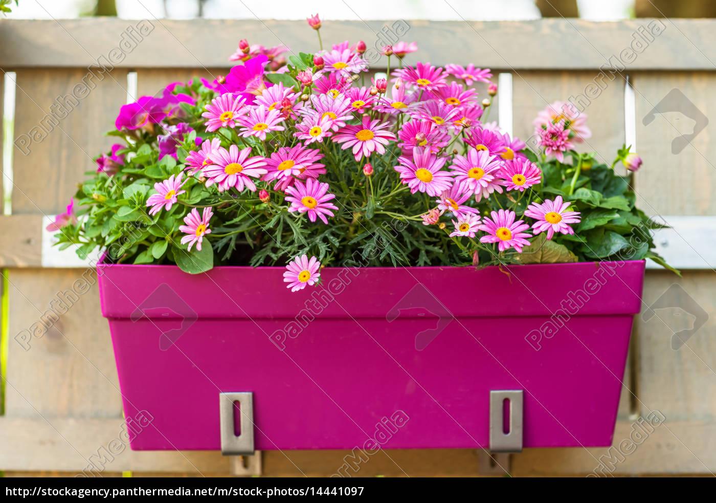 flower pot hanging on wooden fence - 14441097 ...  sc 1 st  PantherMedia & Flower pot hanging on wooden fence - Royalty free image - #14441097 ...