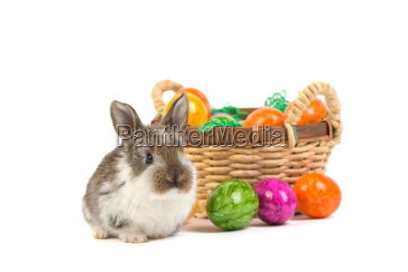 easter bunny with nest
