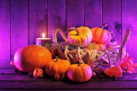 halloween pumpkins in pink light