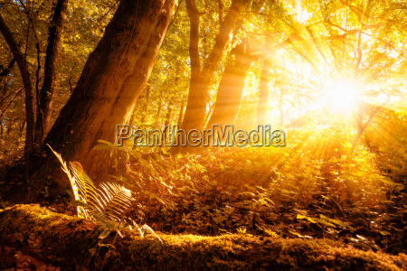 sunny autumn scene in the forest