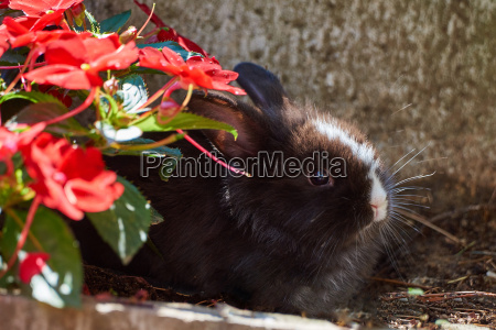 cute rabbit sitting in the flowerbed