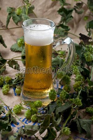 beer in mug on hops