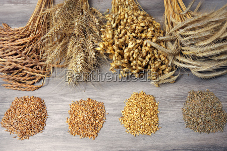 sheaves of wheat with seeds