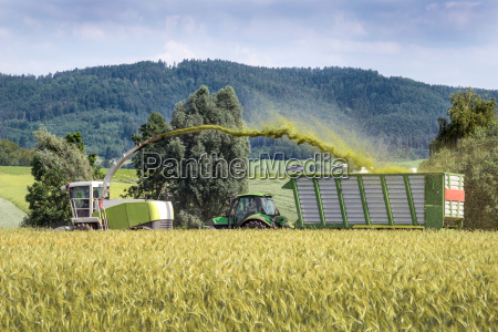 forage with haeckselguttransporter when harvesting whole