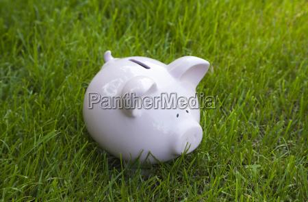 piggy bank in green grass