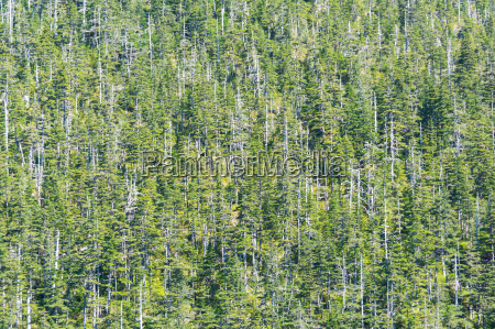 forests in climate change