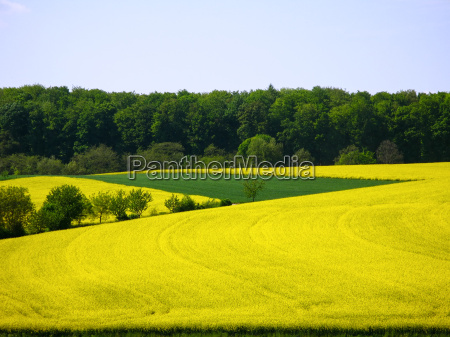 landscape in kraichgau