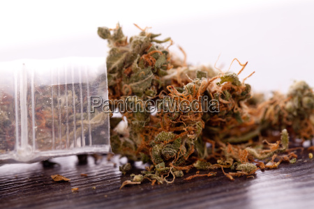 cannabis marihuana flowers in small bags