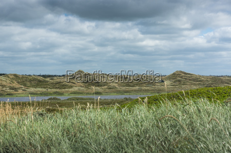 landscape with dunes in denmark