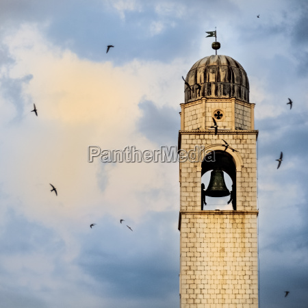 swallows circle the clock tower in
