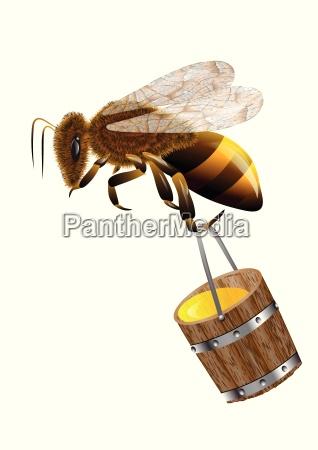 bee and honey in bucket