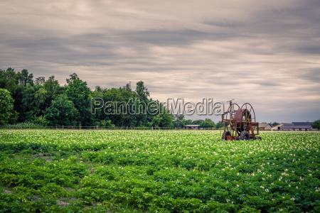 old water pump on a potato