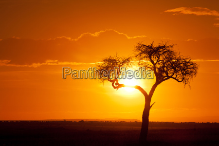 african sunset african sunset