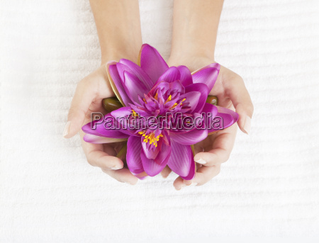bloom women hands with water lilies