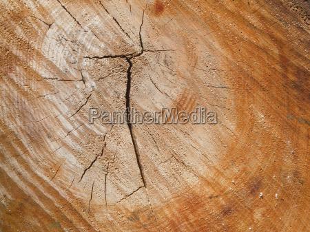 background tree stump with cracks