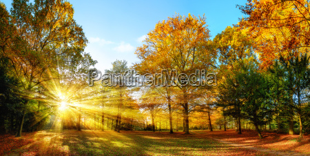 idyllic nature park in autumn with