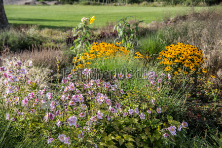 colorful flower meadow with anemones and