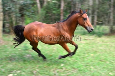 rosie galloping