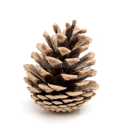 perfect pinecone cut