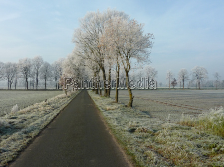 winter on field and meadow