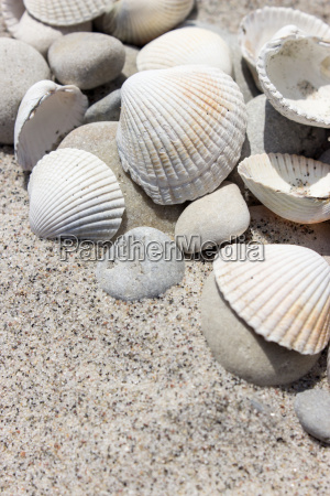 shells and pebbles in the sand