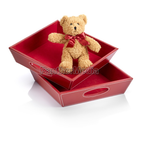toy bear into a toy box