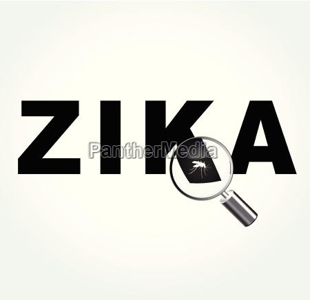 mosquito on zika virus