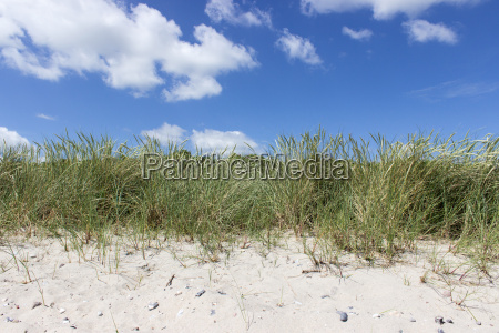 beach grass on the sandy beach