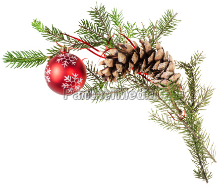 twig spruce tree with cone and