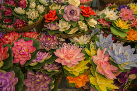asia thailand bangkok chatuchak market