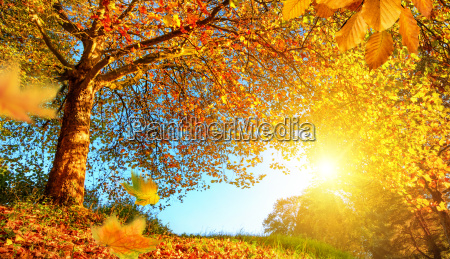 golden autumn scenery with lots of