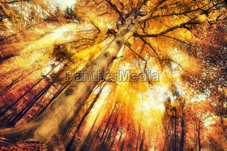 enchanting scenery forest in autumn