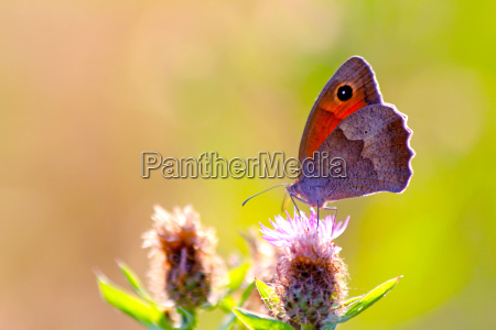 butterfly on a wild summer flower