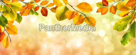 autumn leaves border on bokeh background