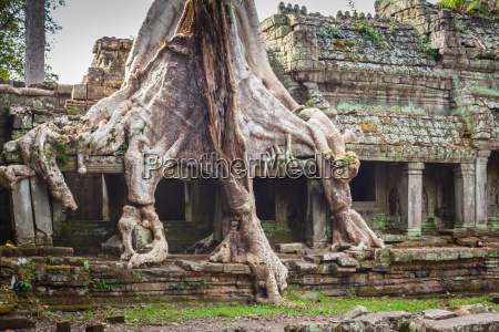 tree root overgrowing parts of ancient