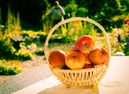 basket of apples on the table