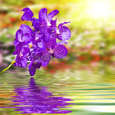violet orchid flower on ripple water