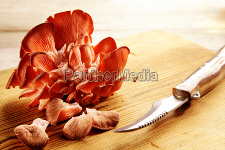 red oyster mushrooms in a shelf