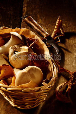 collection of fresh autumn fungi in