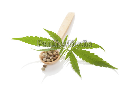cannabis seeds on wooden spoon