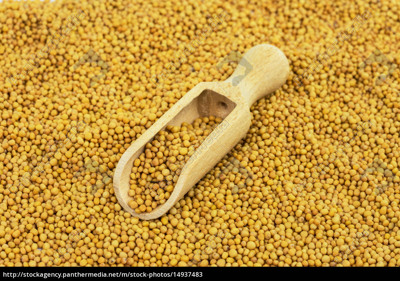 mustard, seeds, yellow - 14937483