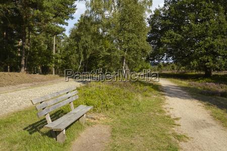 luneburg heath hike path with