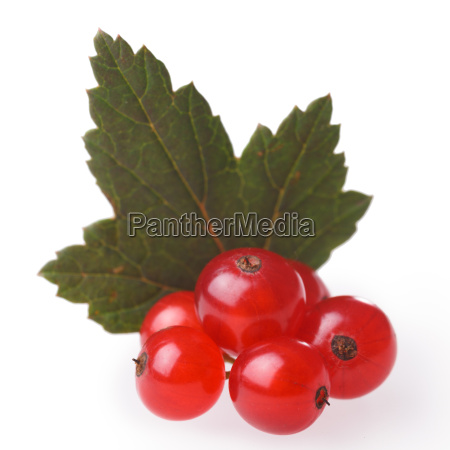 red, currant, bunch - 14940831