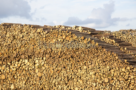 huge stack of logs against cloudy